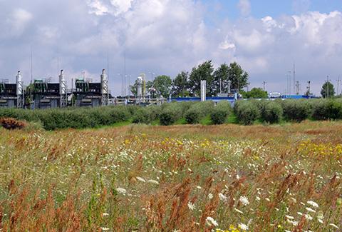 Gazociąg Lasów-Jeleniów. Inwentaryzacja przyrodnicza